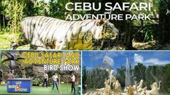 CEBU SAFARI AND ADVENTURE PARK TOUR PACKAGE