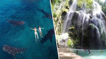 OSLOB WHALE SHARK WATCHING+TUMALOG FALLS TOUR PACKAGE