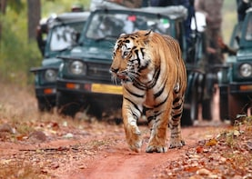 3-Day Private Ranthambhore, Agra and Jaipur Tour from Delhi