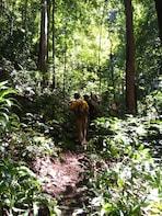 Nam Oun Wilderness Trail