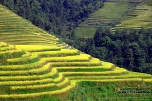 Longji Rice Terraces and Minority Village Day Tour