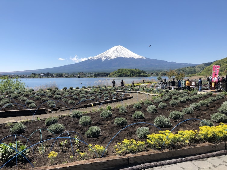 Show item 1 of 6. 10-hour Mt.Fuji & Hakone tour to/from Tokyo with Private Car