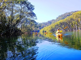 Middle Harbour Kayaking Eco Tour