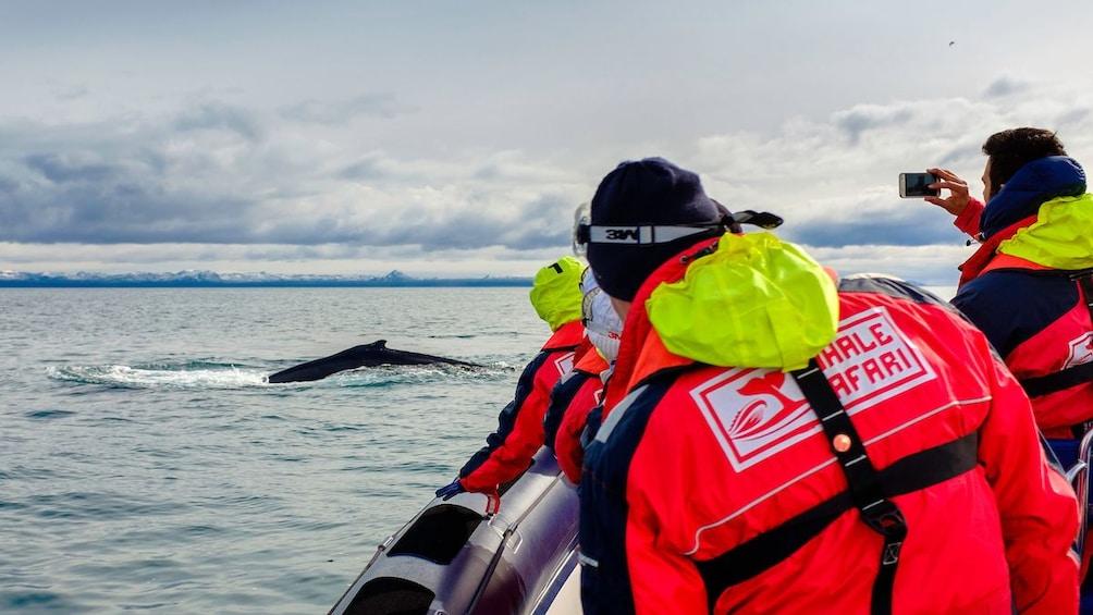 Express Whales, Eyjafjord & Akureyri