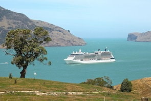 Akaroa Cruise Tour, full day, private 1-5 ppl no add-ons