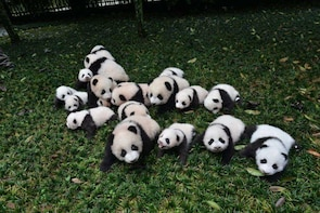 Giant Pandas and the Jinsha Site Museum
