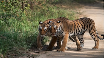 Delhi-Jim Corbett National Park Tour & Jeep Safari