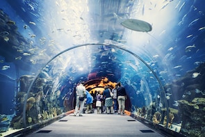 Dubai Aquarium & Underwater Zoo Ticket with Sharing Transfer