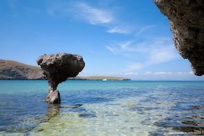 Sealion Snorkel & Balandra Beach Day La Paz