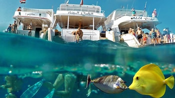 Snorkeling Trip and Excursion from Safaga Port