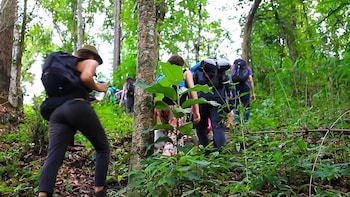 1 DAY Trekking by Tour Hub Asia