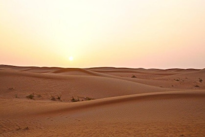 Experience Premium Red Dunes Safari & Camel Safari with BBQ Dinner