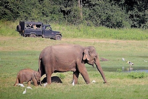 The Mighty Elephant Gathering of Asia: 2 Pax Group-Day Tour from Colombo