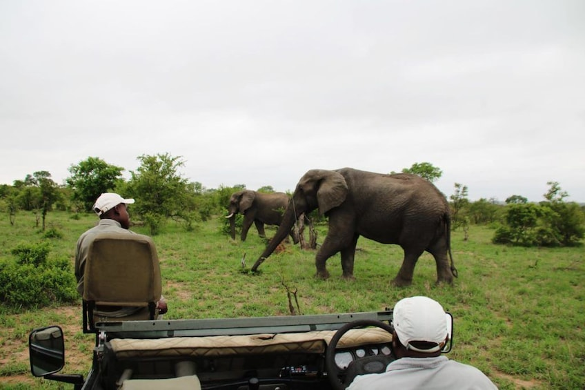 Show item 1 of 9. 3 Day Kruger National Park Private Reserve Safari