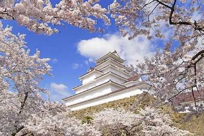 Temple and cherry blossoms in Tohoku