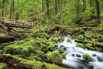 1-Day Olympic National Park Tour from Seattle, WA
