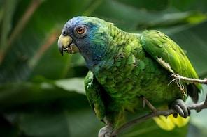 Dominica Birding & Milton Falls Hike