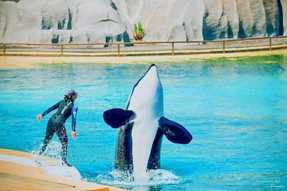 1-Day Transport to SeaWorld Orlando from Miami