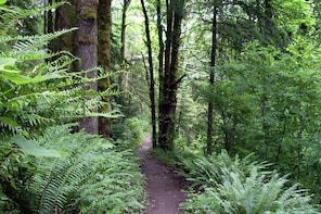 Guided Hike in Portland's Forest Park! (Largest Urban Wilderness in the USA...