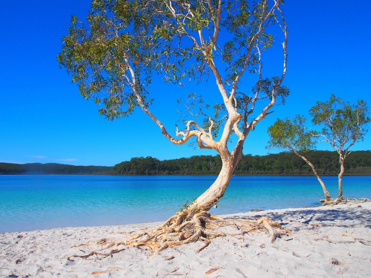 Show item 2 of 4. Fraser Island 4WD Warrior Day Tour departing Rainbow Beach