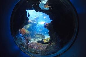 Japan Kyoto Aquarium Admission Ticket
