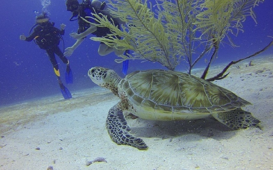 Show item 2 of 2. Scuba Dive With Photography – Havelock