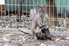 Australia Sydney Featherdale Wildlife Park Entry Ticket
