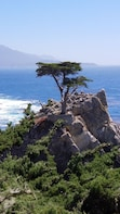 Private Tour to Monterey, 17-Mile Drive, Carmel, and Gilroy