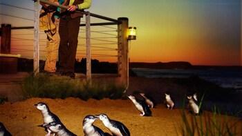 Australia Melbourne Phillip Island Wild Oceans Adventure