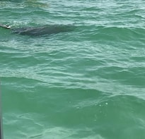 Dolphin Shelling Snorkeling Cruise, Shell - Sanddollar key