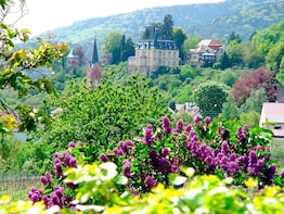 Weinstrasse Day Tour (8h, max. 5 people, chauffeur, guide)