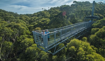 Australia Sydney Illawarra Fly Treetops Walk Entry Ticket