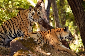 Elephant and Tiger Sighting in Rajaji National Park