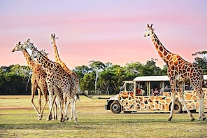 Australia Melbourne Werribee Open Range Zoo