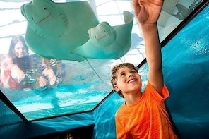 Newport Aquarium Admission With Free 5 X 7 Photo Included
