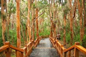 Navigation to Victoria Island & Myrtle Forest