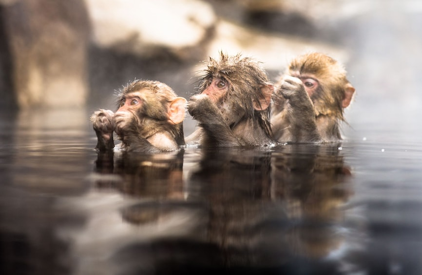 13-hour Snow Monkey Park to/from Tokyo with Private Car