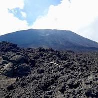 Private Full-Day: Pacaya Volcano