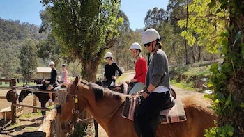Mudgee Wine Tasting Tour, Lunch & Morning Horse Ride