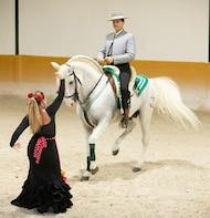 ANDALUSIAN HORSE - FLAMENCO SHOW
