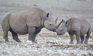 Namibian Explorer Safari