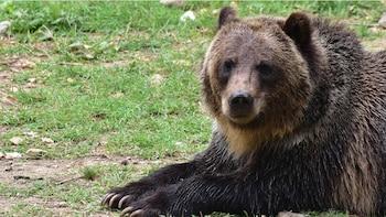 Bear Sanctuary, Dracula's Castle and Brasov Medieval city