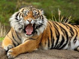 Hornbills Tigers & Rhino sights in Manas Park from Guwahati