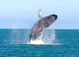Whale Watching Cruise with Kingfisher Tours Sri Lanka