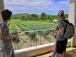 The AUTHENTIC Rhodes PRIVATE Half-Day or Full-Day Tour