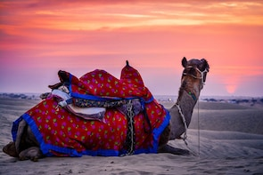 Luxury camping stay in sand dunes, Jaisalmer