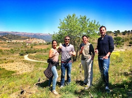 Guided Wine and Olive oil tour in the Priorat Wine Region