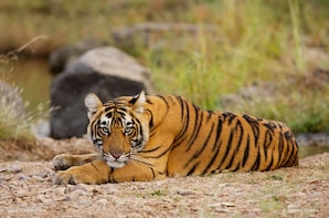 5-Day Tour to Jaipur and Agra with Ranthambhore from Delhi