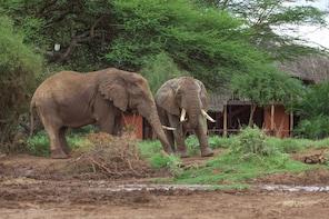 2 Days Mombasa to Amboseli Luxury Safari