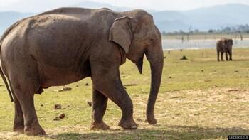 Udawalawe National Park Private Safari from Ella